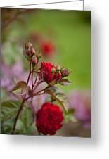 Beautiful Spring Greeting Card