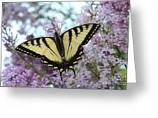 Beautiful Swallowtail Greeting Card