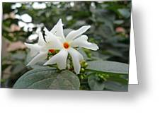 Beautiful White Flower With Orange Center Greeting Card