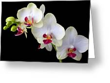 Beautiful White Orchids Greeting Card