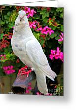 Beautiful White Pigeon Greeting Card