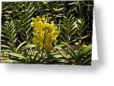Beautiful Yellow Flowers Inside The National Orchid Garden In Singapore Greeting Card