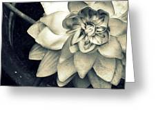 Beauty Among The Ashes Greeting Card