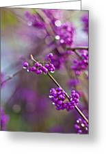 Beauty Berry Explosion Greeting Card