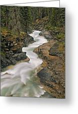 Beauty Creek, Banff National Park Greeting Card