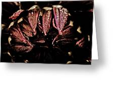 Beauty In Dark Greeting Card by Terrie Taylor