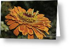 Beauty In Orange Petals Greeting Card