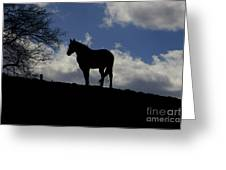 Beauty In The Wind Greeting Card