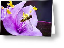 Beauty Invaded Greeting Card by Michael Putnam