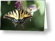 Beauty Of Butterflies  Greeting Card
