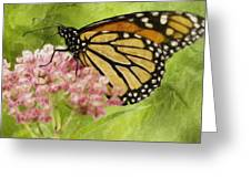 Beauty Of Nature Greeting Card by Jack Zulli