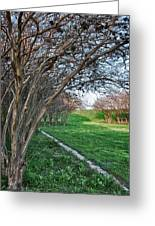 Beauty Without Blossoms Greeting Card