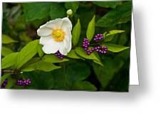 Beautyberry And Anemone 2 Greeting Card