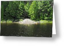 Beaver Town Greeting Card