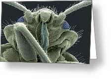 Bedbug Head, Sem Greeting Card