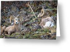 Bedded Pair Greeting Card