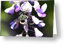 Bee And Blooms - Card Greeting Card