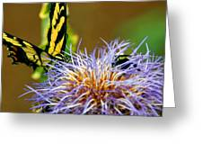 Bee And The Butterfly Greeting Card