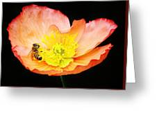 Bee Asleep In A Flower Greeting Card