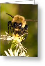 Bee Drinking Greeting Card