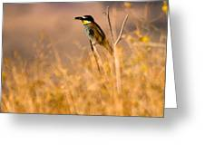 Bee Eater With Insect Greeting Card