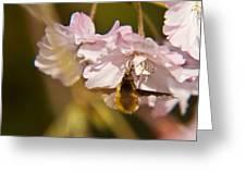 Bee Fly Feeding 1 Greeting Card