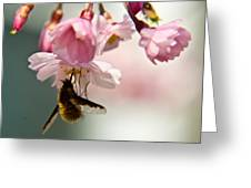 Bee Fly Feeding 2 Greeting Card