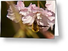 Bee Fly Sucking Nectar 1 Greeting Card