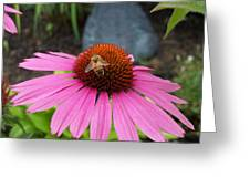 Bee Gathering Pollen On Cone Flower Greeting Card