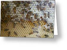 Bee Hive Greeting Card