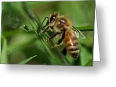 Bee In Green Greeting Card