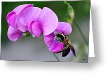 Bee In The Pink - Greeting Card Greeting Card