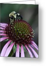Bee Life 1 Greeting Card