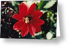 Bee My Bud Greeting Card