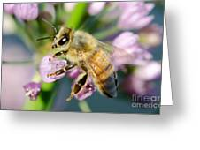 Bee On A Flower Greeting Card