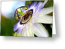 Bee On A Nigella Greeting Card