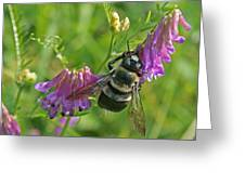 Bee On A Pink Flower Greeting Card