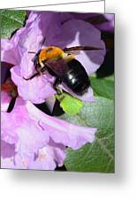 Bee On Azalea Bloom Greeting Card by Lisa Phillips