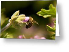 Bee On Blossom Flower Greeting Card