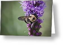 Bee On Gayfeather Squared 1 Greeting Card