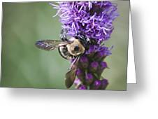 Bee On Gayfeather Squared 2 Greeting Card