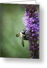 Bee On Gayfeather Greeting Card