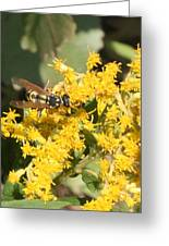 Bee On Goldenrod Greeting Card