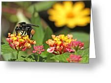 Bee On Lantana Flower Greeting Card