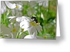 Bee On Primrose Greeting Card