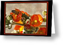 Bee On Red Flower 4 Greeting Card