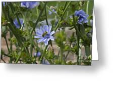 Bee On Romaine Flower Greeting Card