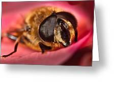 Bee On Rose Petal Greeting Card