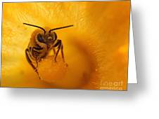 Bee On Squash Flower Greeting Card
