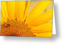 Bee On Sunflower Greeting Card